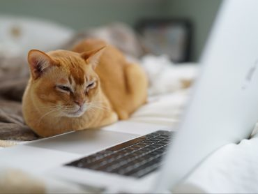 Image of a cat near a keyboard