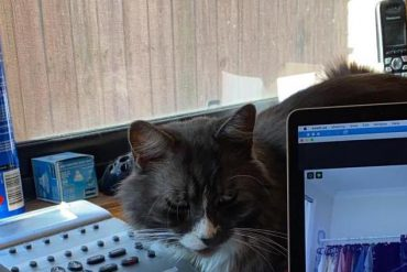 Home workstation with pet cat