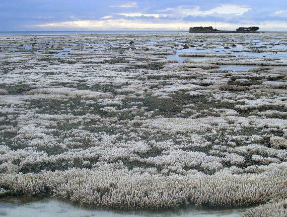 Expanse of bleached coral at low tide